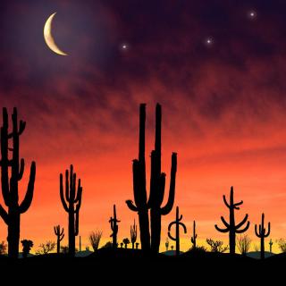 Saguaro National Park in Arizona - Obrázkek zdarma pro 208x208