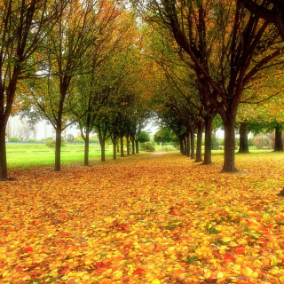 Autumn quiet park - Obrázkek zdarma pro iPad
