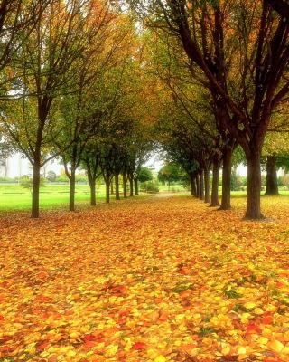 Autumn quiet park - Obrázkek zdarma pro iPhone 5