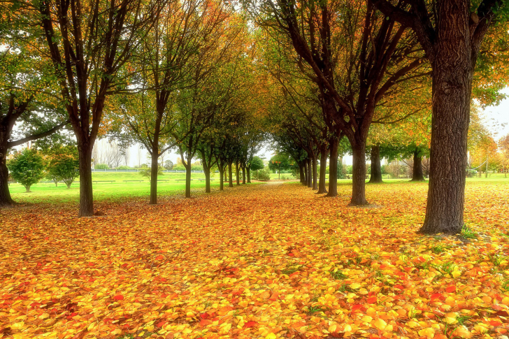 Autumn quiet park wallpaper