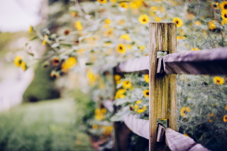 Yellow Flowers Behind Fence Wallpaper for Android, iPhone and iPad