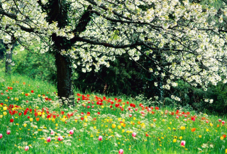 Free Spring Forest Flowers Picture for Android, iPhone and iPad