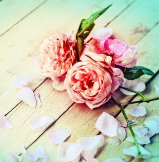 Rose Petals - Obrázkek zdarma pro iPad mini 2