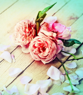 Rose Petals - Obrázkek zdarma pro Nokia Asha 305
