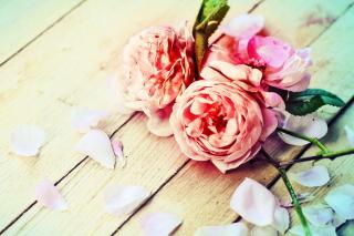 Rose Petals - Obrázkek zdarma pro Sony Xperia Z