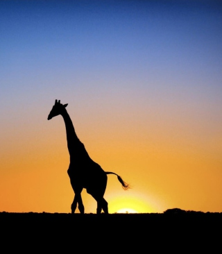 Safari At Sunset - Giraffe's Silhouette - Obrázkek zdarma pro Nokia Lumia 928