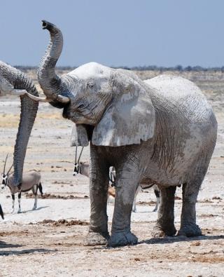 Elephants - Obrázkek zdarma pro 480x640