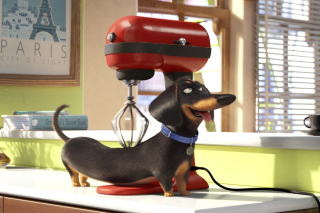 The Secret Life of Pets Picture for Nokia Asha 200