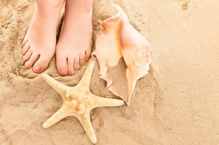 Free Seashell, Seastar And Sandy Feet Picture for Android, iPhone and iPad