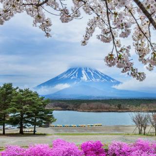 Spring in Japan - Obrázkek zdarma pro iPad