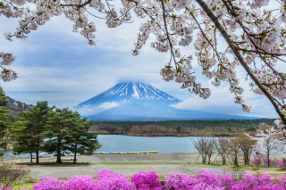 Spring in Japan Wallpaper for Android, iPhone and iPad