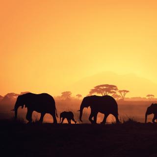 African Silhouettes - Obrázkek zdarma pro iPad mini