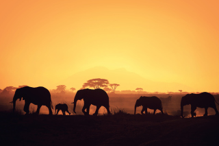 Free African Silhouettes Picture for Android, iPhone and iPad