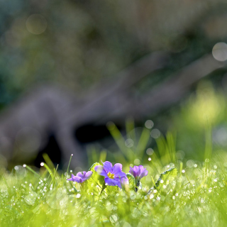 Grass and lilac flower - Obrázkek zdarma pro 1024x1024