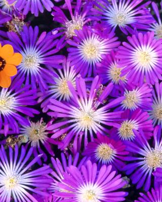 Purple Colour Flowers - Obrázkek zdarma pro Nokia Asha 501