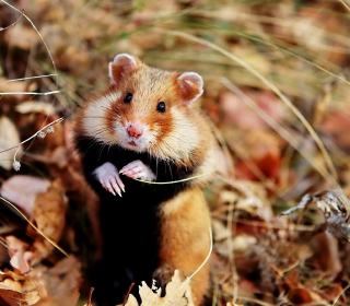 Cute Hamster - Obrázkek zdarma pro iPad