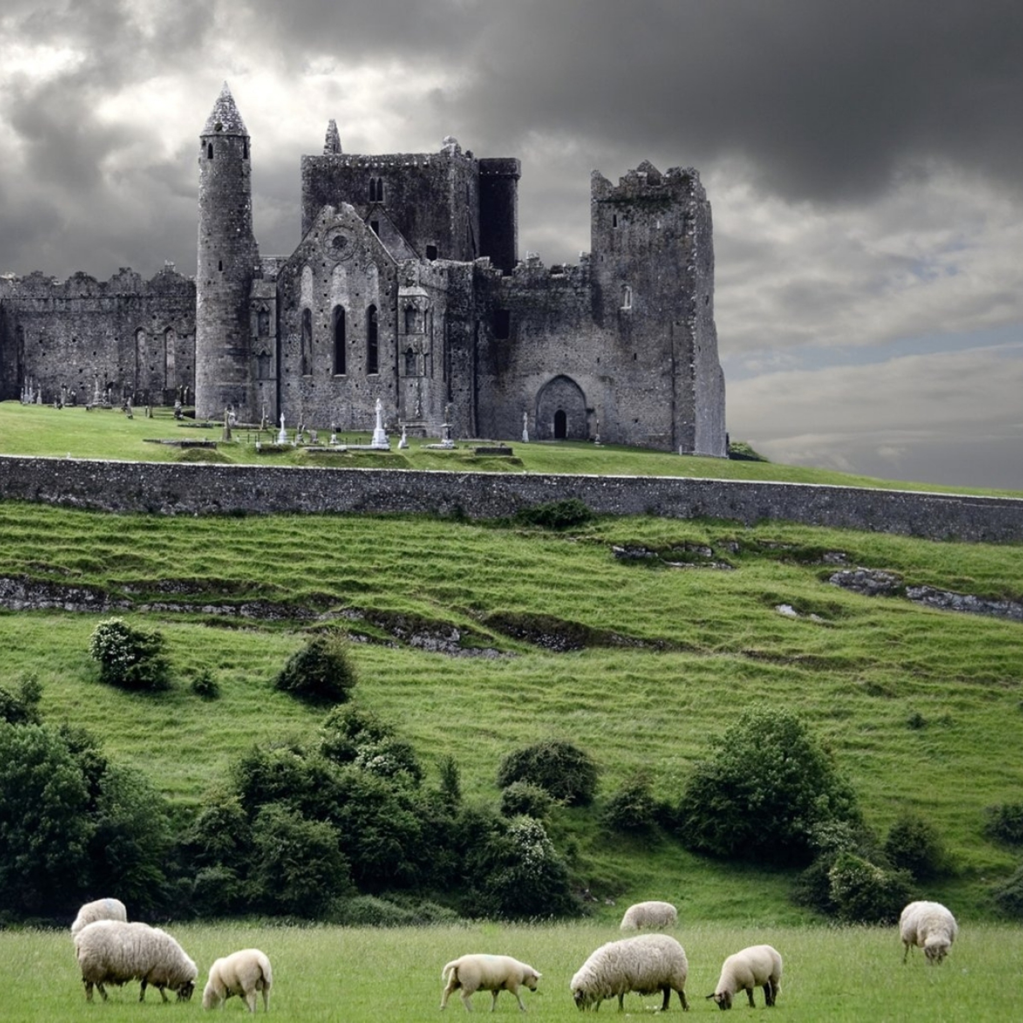 Ireland Landscapes Wallpaper Ireland Landscape With Sheep