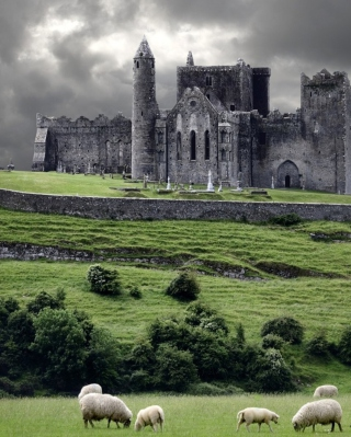 Ireland Landscape With Sheep And Castle - Obrázkek zdarma pro Nokia C3-01 Gold Edition