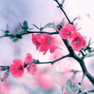 Pink Spring Flowers - Obrázkek zdarma pro 128x128