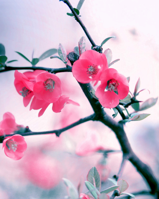 Pink Spring Flowers - Obrázkek zdarma pro 128x160