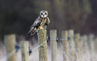 Wood Owl Wallpaper for Android, iPhone and iPad