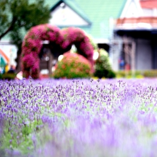 Purple Macro Flowers - Obrázkek zdarma pro iPad