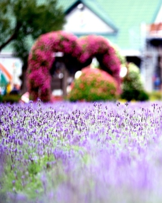 Purple Macro Flowers - Obrázkek zdarma pro 320x480