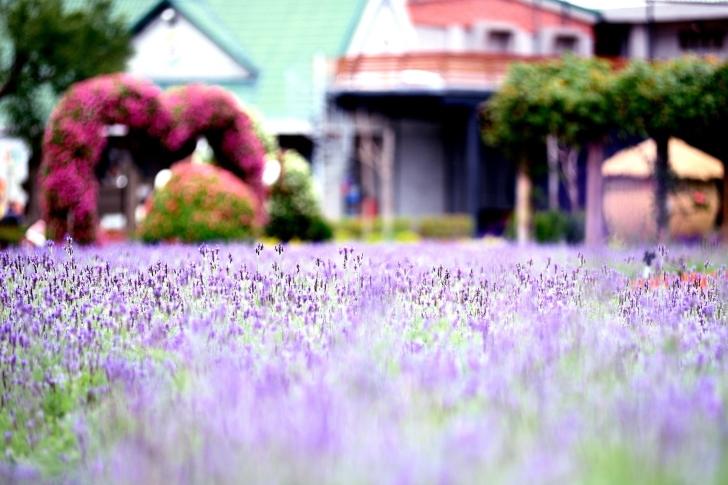 Purple Macro Flowers wallpaper