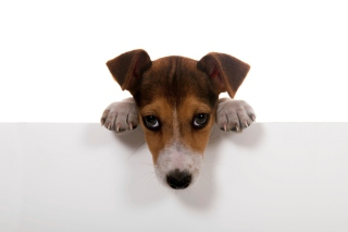 Sad Little Puppy Wallpaper for Android, iPhone and iPad