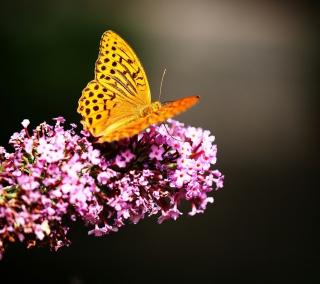 Butterfly On Lilac - Obrázkek zdarma pro 128x128