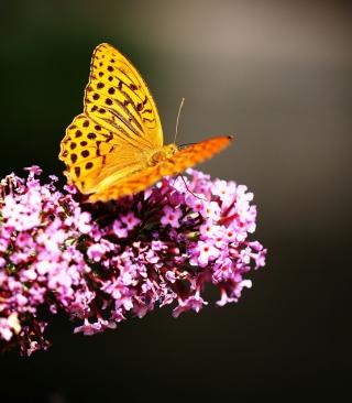 Butterfly On Lilac - Obrázkek zdarma pro 128x160
