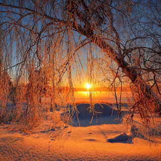 Winter Cold Landscape - Obrázkek zdarma pro iPad