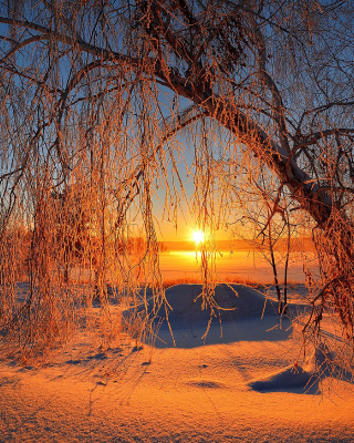 Winter Cold Landscape - Obrázkek zdarma pro Nokia Asha 305