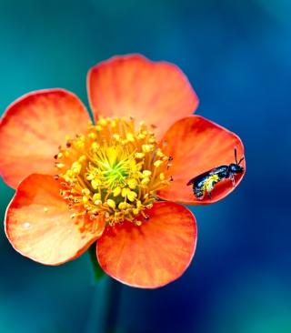 Bee On Orange Petals - Obrázkek zdarma pro 320x480