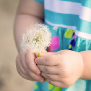 Little Girl's Hands Holding Dandelion - Obrázkek zdarma pro iPad 2