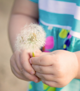 Little Girl's Hands Holding Dandelion - Obrázkek zdarma pro 360x400