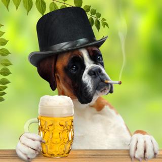 Dog drinking beer - Obrázkek zdarma pro 128x128