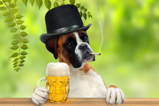 Dog drinking beer - Obrázkek zdarma pro Android 1280x960