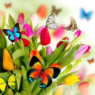 Tulips and Butterflies - Obrázkek zdarma pro 128x128