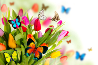 Tulips and Butterflies - Obrázkek zdarma pro Widescreen Desktop PC 1920x1080 Full HD