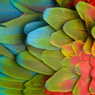 Parrot Pattern - Obrázkek zdarma pro iPad