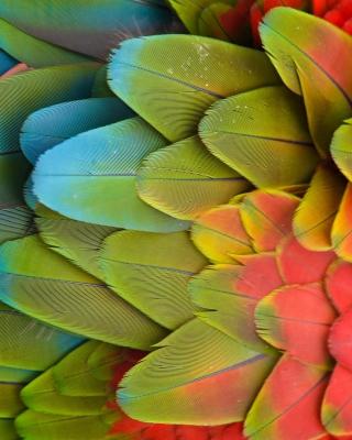 Parrot Pattern - Obrázkek zdarma pro Nokia Asha 311