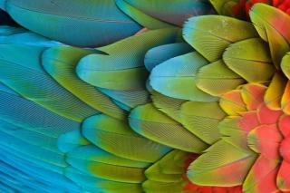 Parrot Pattern - Obrázkek zdarma pro Samsung Galaxy Ace 4