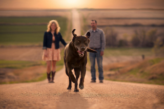 Happy Dog Run Background for Android, iPhone and iPad