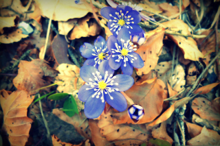 Spring Is Waking Up Picture for Android, iPhone and iPad