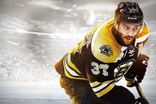 Free NHL Boston Bruins Picture for Nokia Asha 200