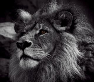 Black And White Lion - Obrázkek zdarma pro 1024x1024