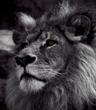 Black And White Lion - Obrázkek zdarma pro Nokia X2