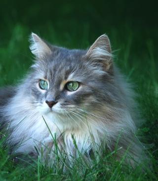Fluffy Cat - Obrázkek zdarma pro 320x480