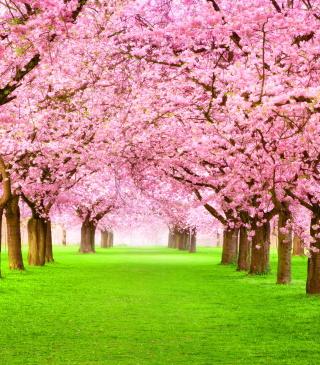 Sakura Park - Obrázkek zdarma pro Nokia X1-01